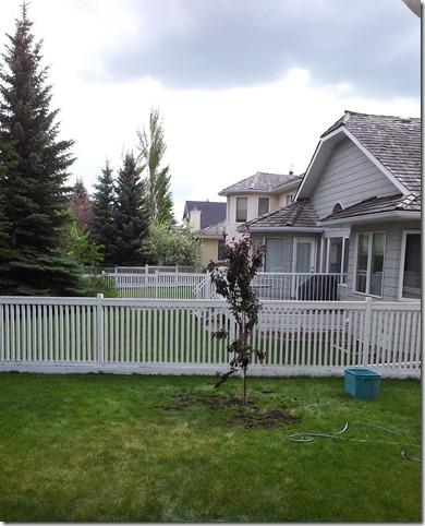 diy tree planting, day one